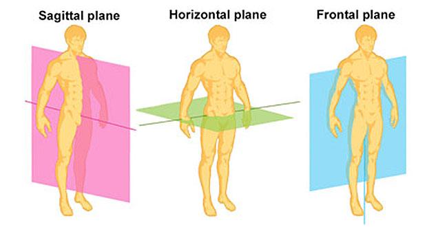 The Sagittal Plane